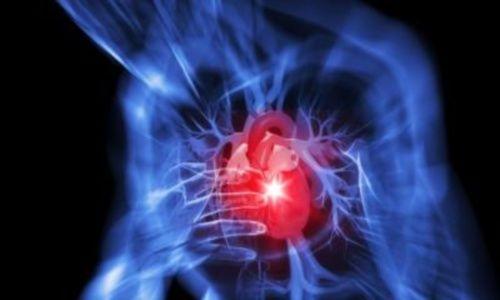 cellule-cuore-malattie-cardiovascolari_06122012