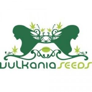 logo_vulkania_seeds_m_1-300x300