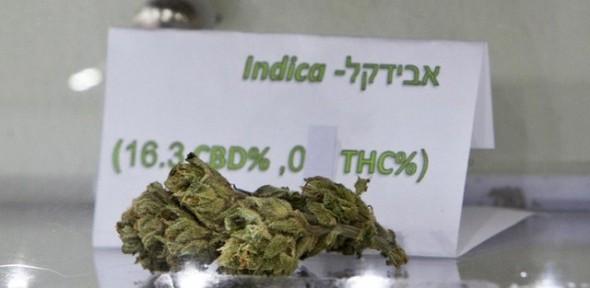 Israel : huelga de hambre para protestar contra las restricciones sobre el uso médico del cannabis