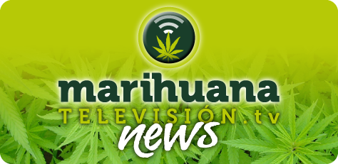 Marihuana Television News 12, especial Marcha Mundial por la Marihuana