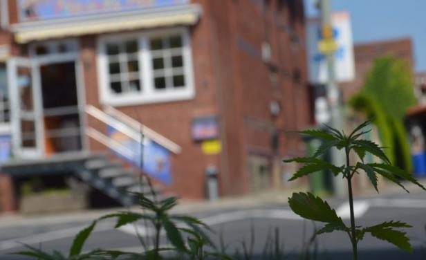 Una ciudad alemana que fue invadida por la marihuana