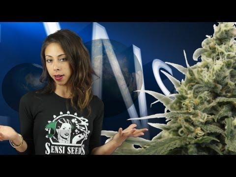 Marihuana televisión New 18