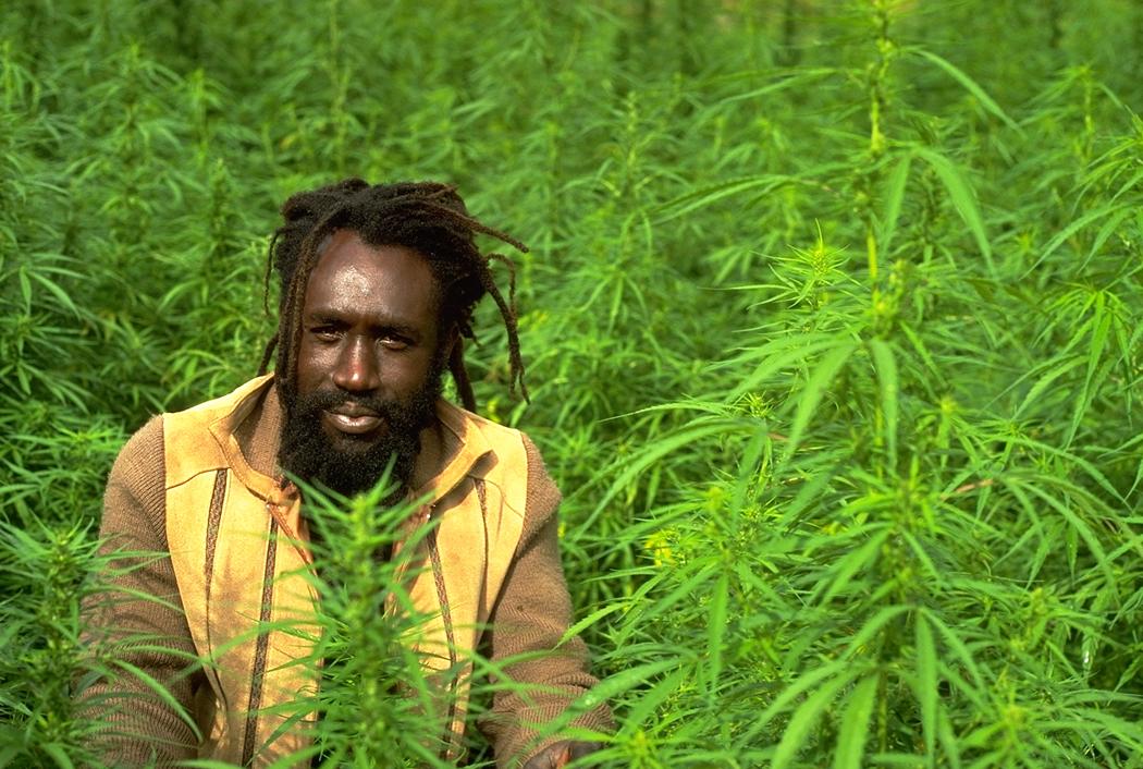 Tour por las plantaciones de Jamaica