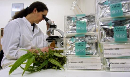 Usos analgésicos del Cannabis