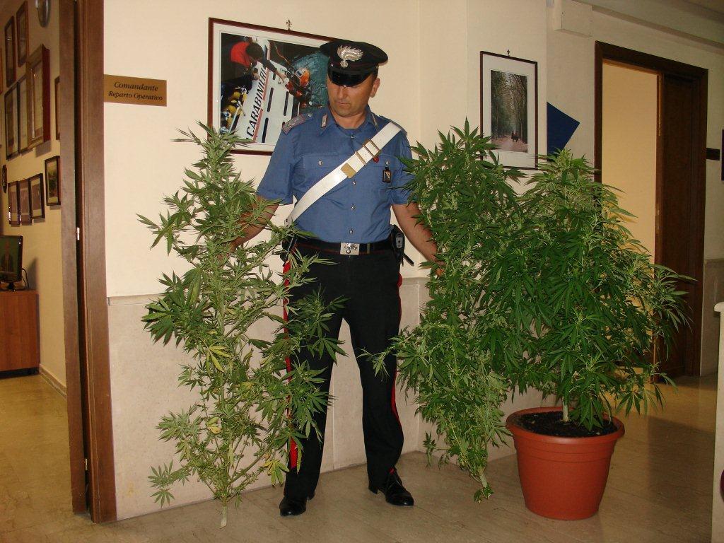 Italia podría llegar pronto la despenalización del cultivo Cannabis