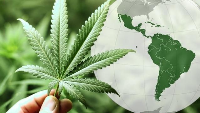 Marihuana: Argentina y Chile seguirían los pasos de Uruguay