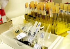 Se Puede Tomar Drogas De Forma Responsable, Núria Calzada, Energy Control